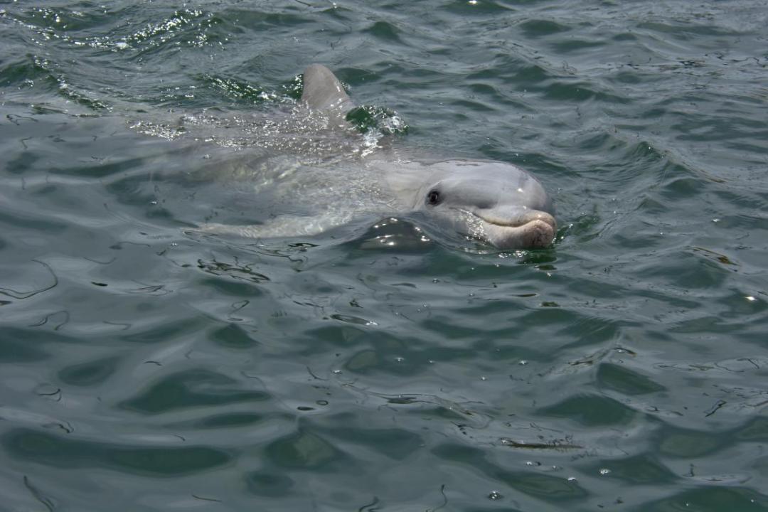 dauphin dans son milieu sauvage