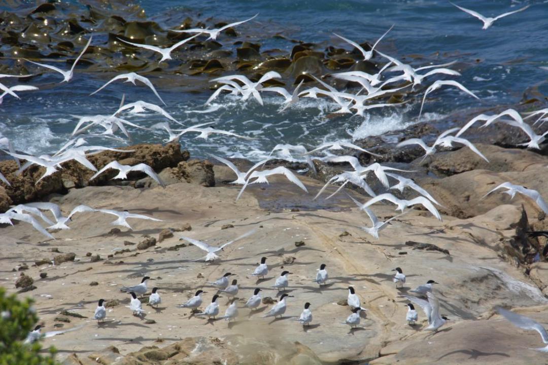 une envolée d'oiseaux