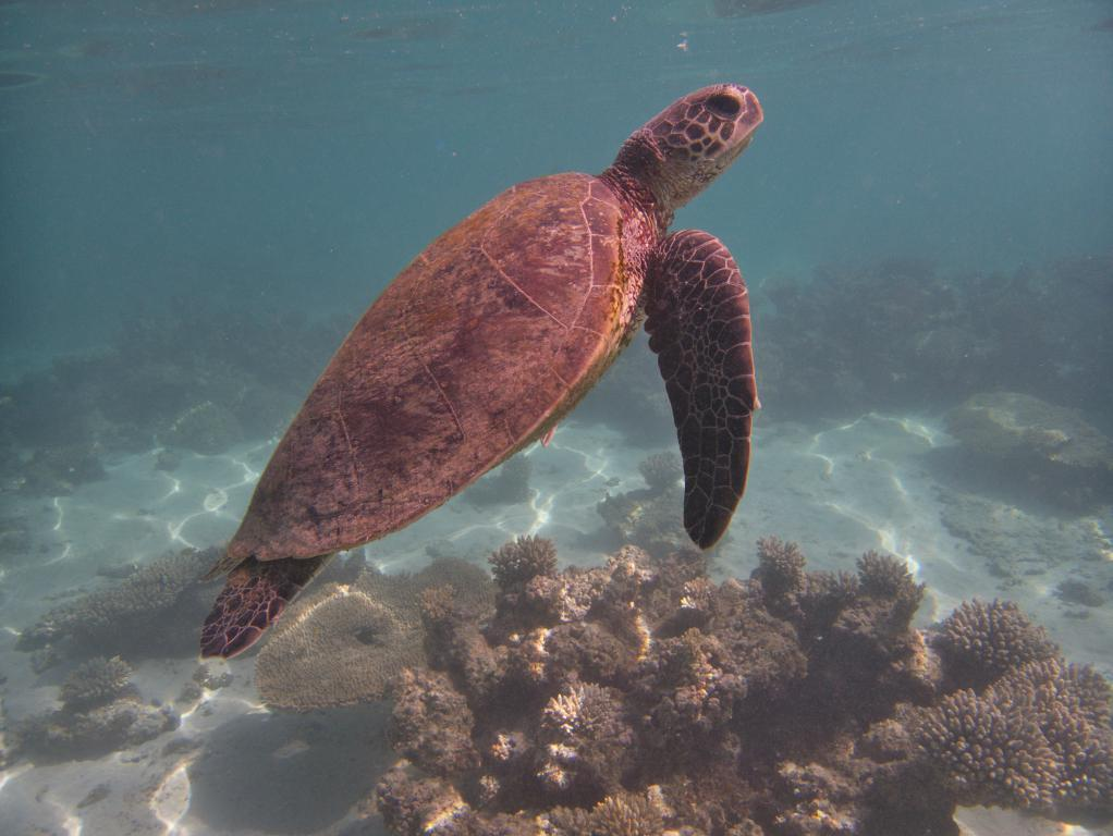 tortues marines de beaux animaux sauvages