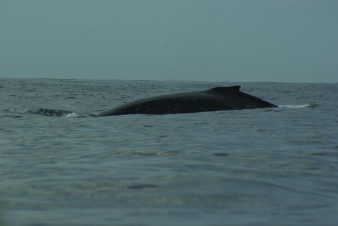 baleine île de madagascar