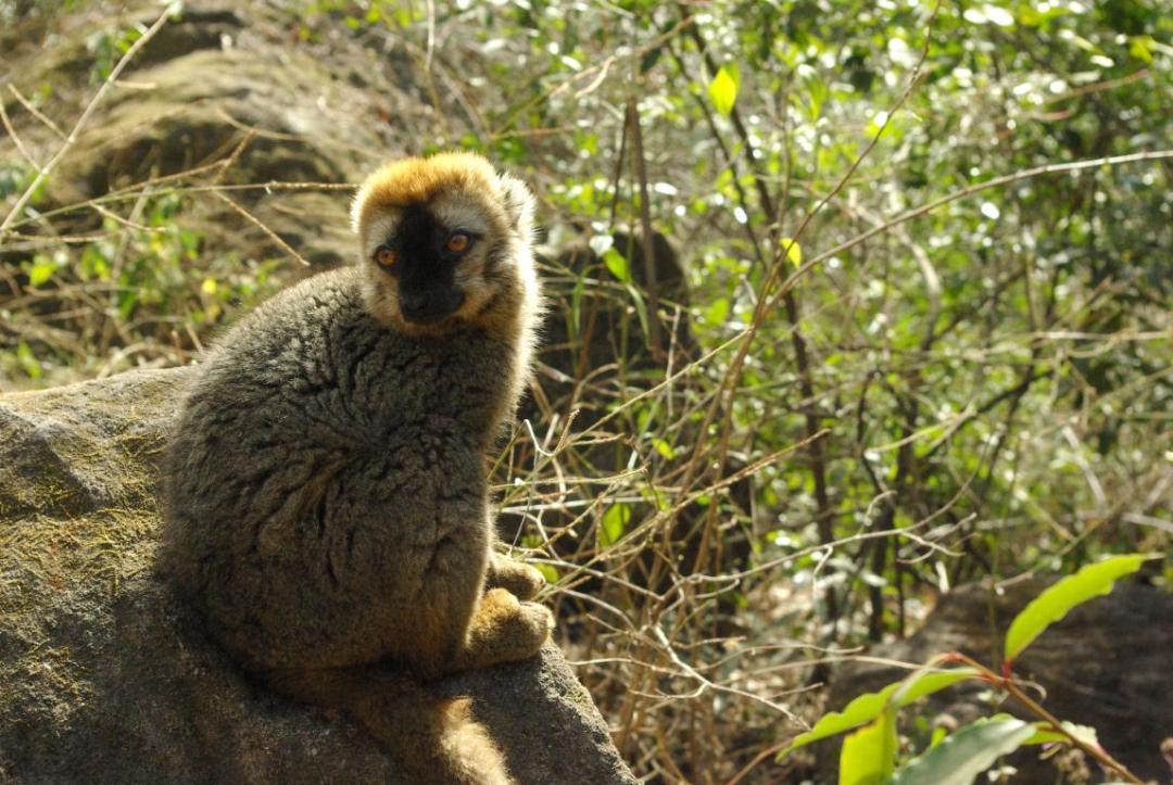 lémurien centre île madagascar