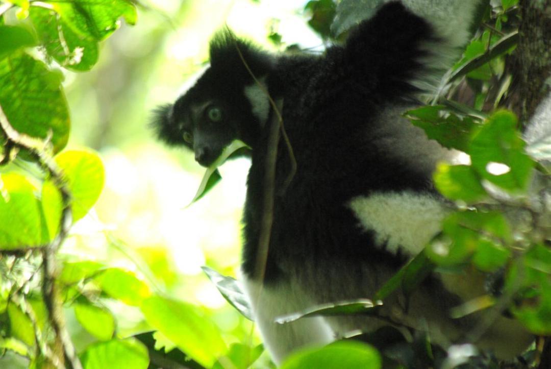 lémurien à Madagascar