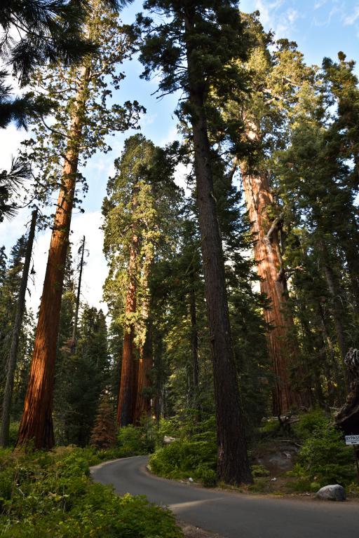 sequoia national park ouest américain
