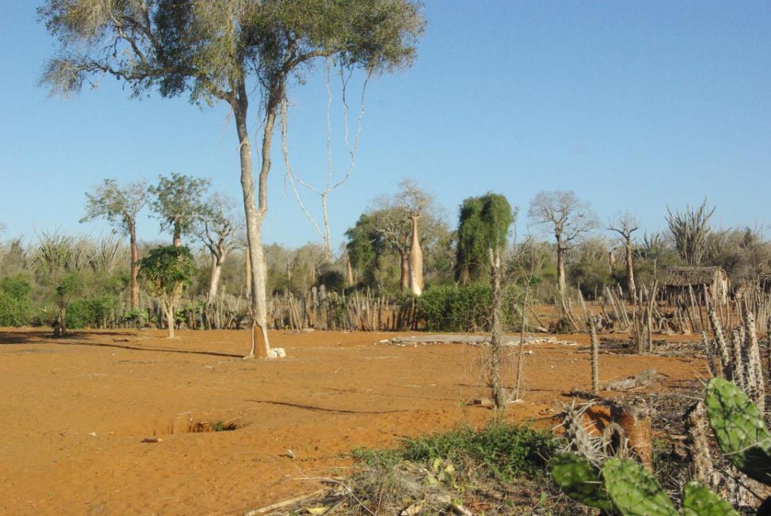 terre rouge île de Madagascar