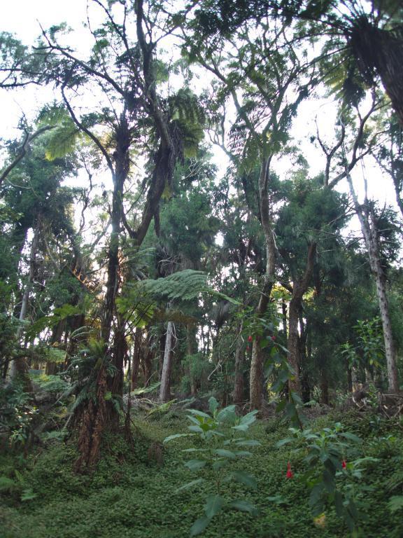 l'île de la réunion une île au climat tropical