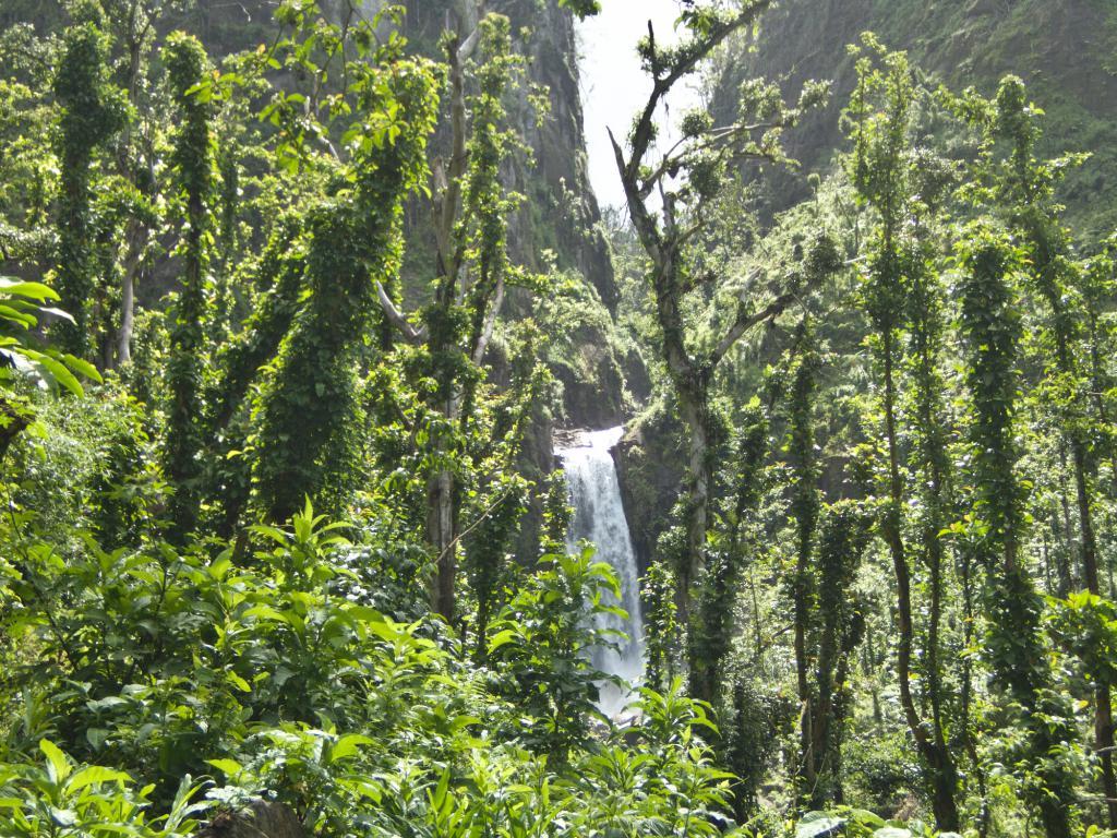 La Dominique, ile nature dans les caraibes