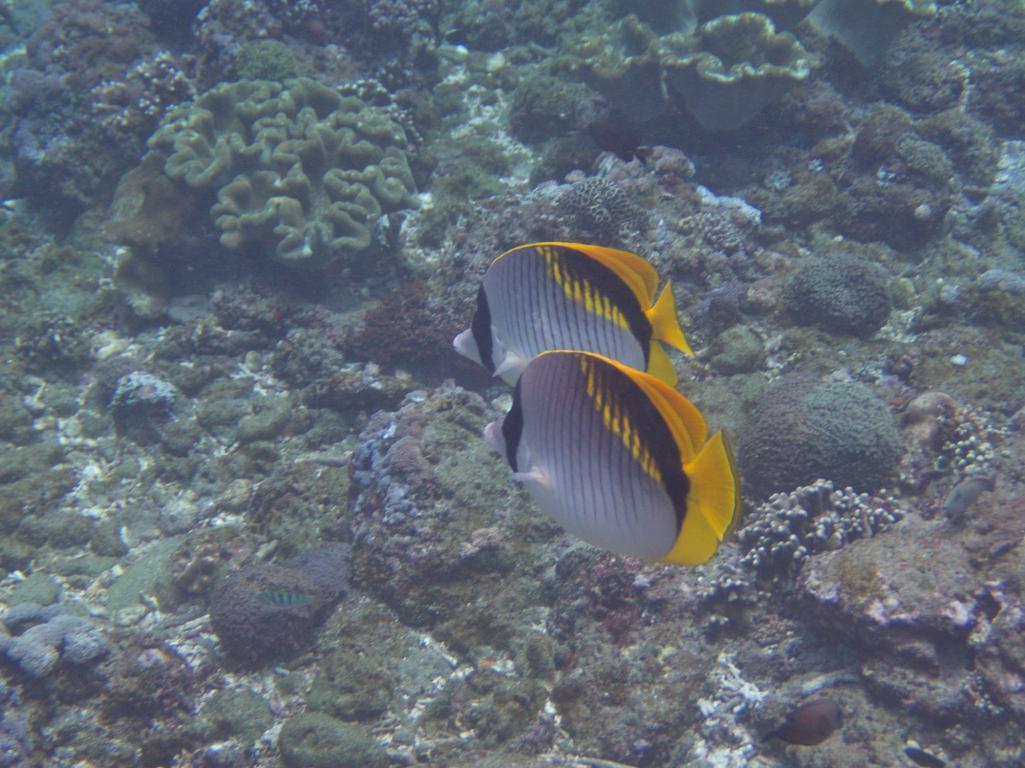 les poissons colorés près de nusa pénida à bali