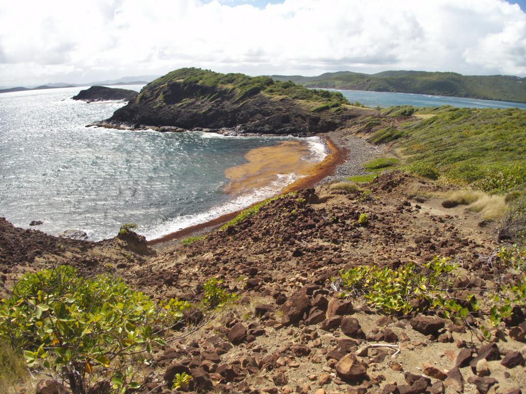 la presqu'ile de la caravelle en Martinique dans les caraibes