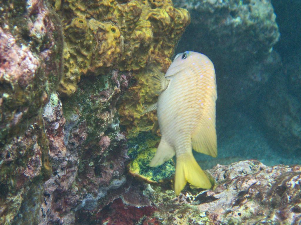 snorkeling sainte lucie dans les caraibes