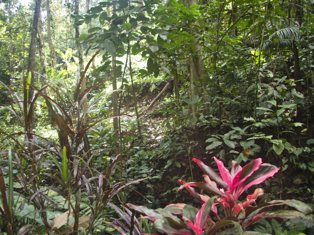 un exemple de végétation tropicale d'indonésie