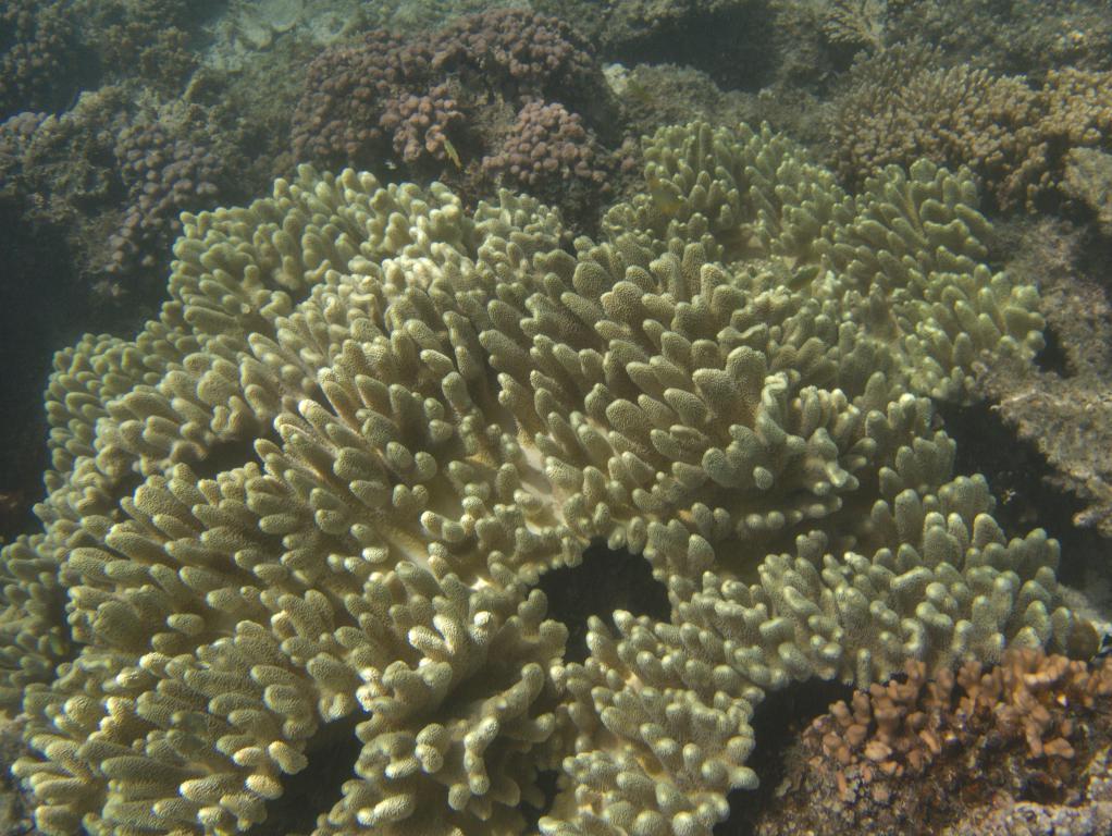 magnifiques coraux de la barrière