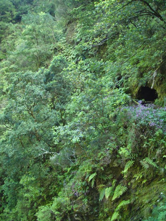 tunnel de levada caché dans la végétation de madère