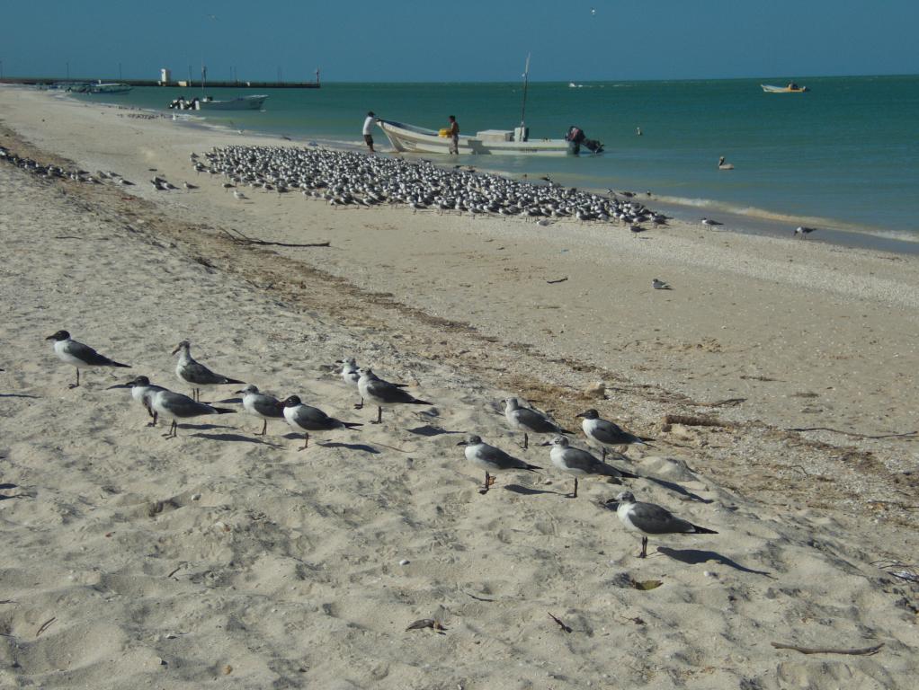 plage sauvage de Celestun yucatan mexique