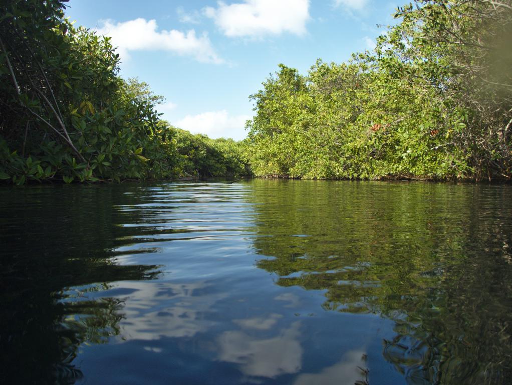 cenote tranquille dans tulum peninsule yucatan