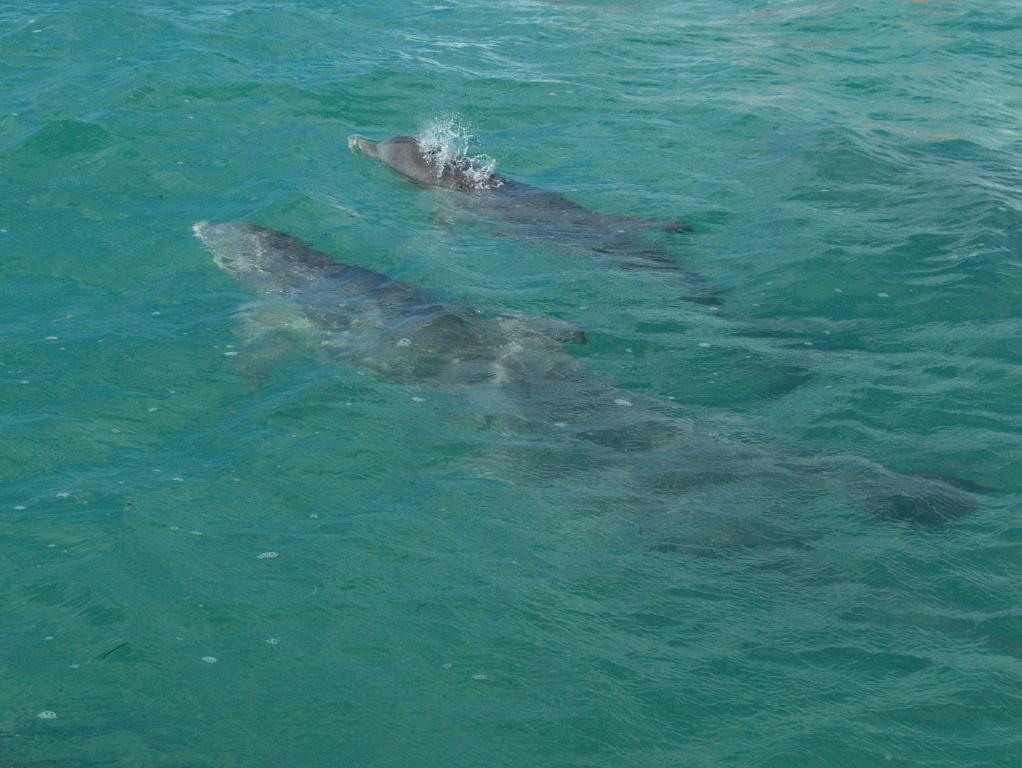 dauphins sien kaan reserve peninsule yucatan