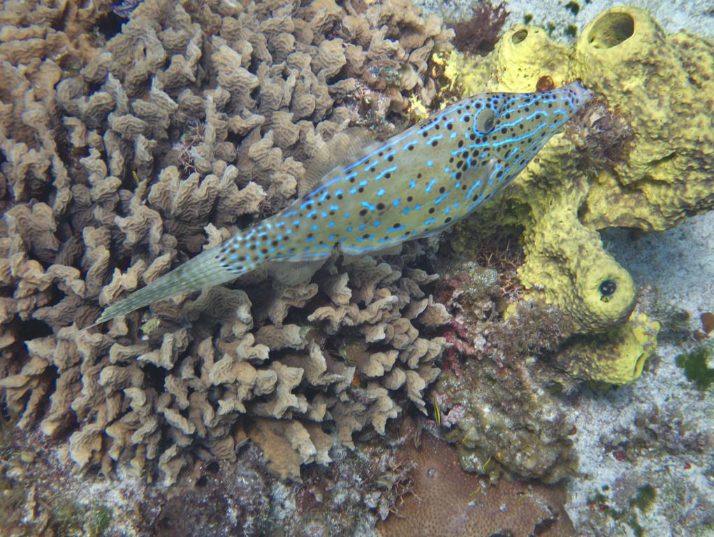 snorkeling à cozumel peninsule yucatan