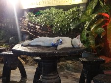 Este gato sucumbió al desfase de Tonsai (Phi Phi Don)