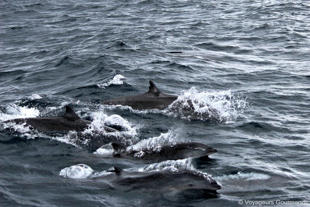 dauphins-en-martinique-17