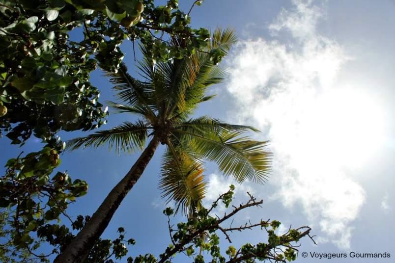 Plage de Martinique (10)