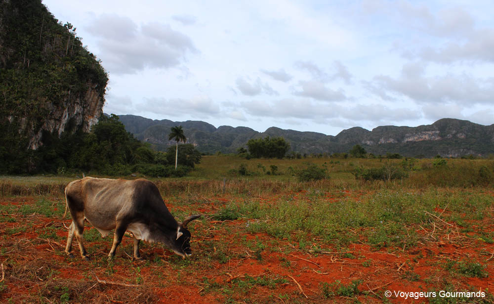 À Blog Trip 15 Road JoursBudgetConseils CubaItinéraire De MzVSUp