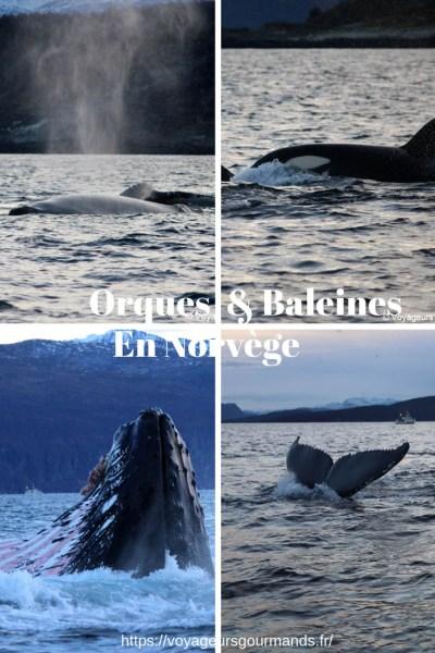 baleines en Norvège