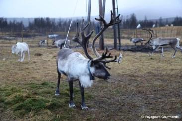 rennes a tromso norvege