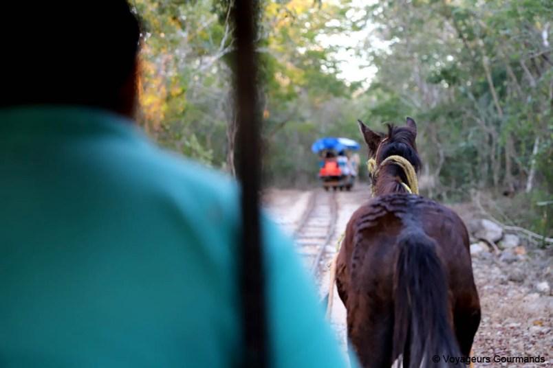 road trip dans le Yucatan (37)