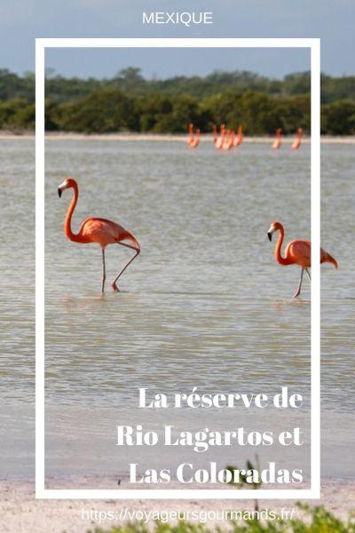 La réserve de Rio Lagartos et Las Coloradas