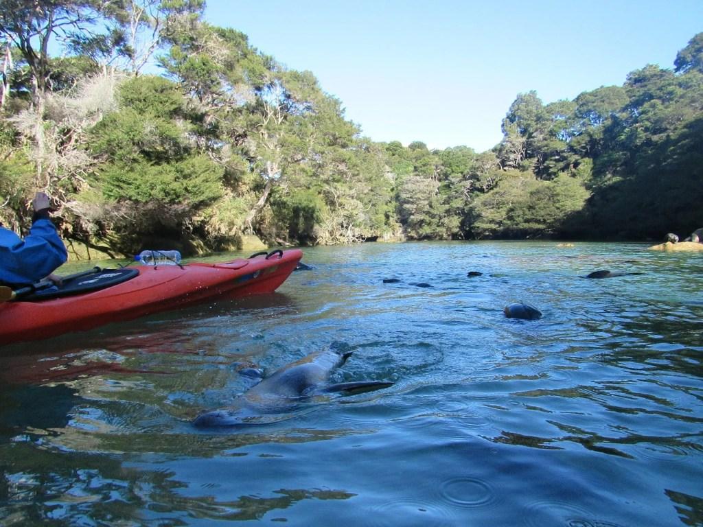 kayaking abel tasman