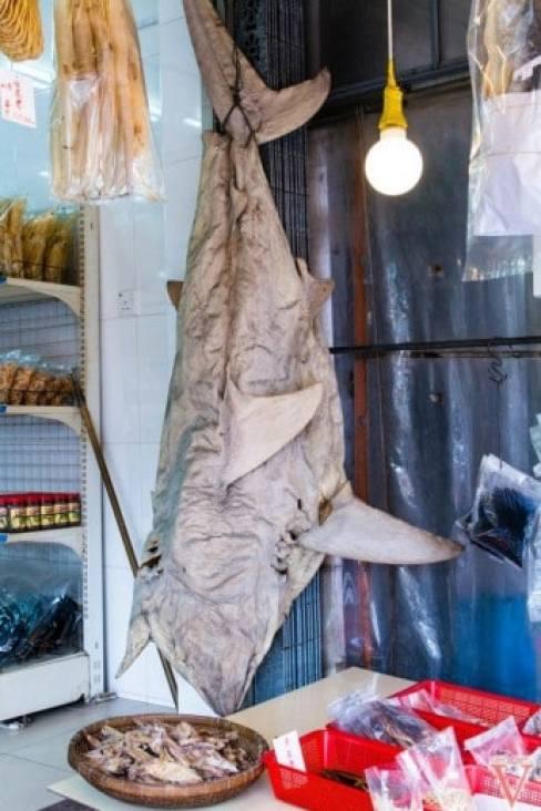 Le gros requin pub