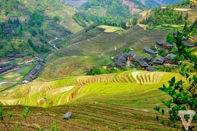 Jinkeng guilin rizières