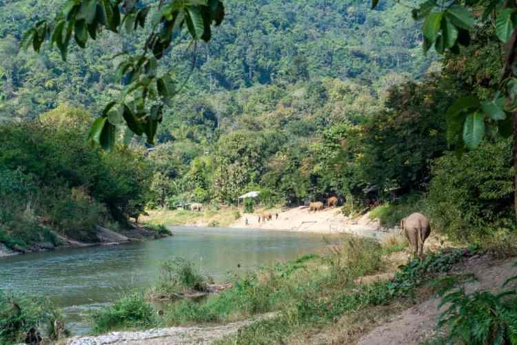 Chiang Mai éléphants