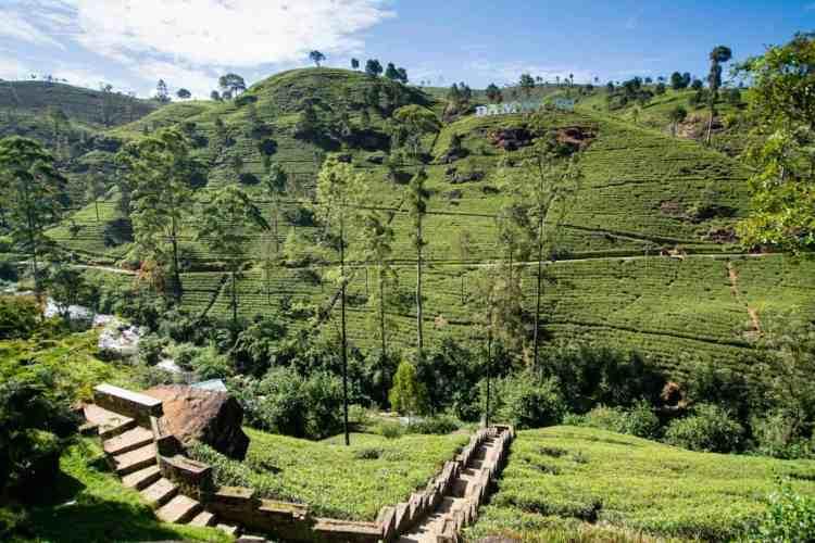 Les plantations de thé de Nuwara Eliya