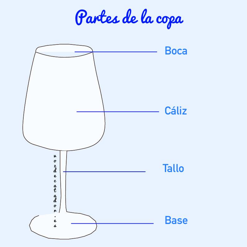 Copas de cata vozdecatador.es