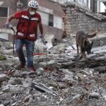 """""""Chichí"""" el perro rescatista que localizó con vida entre los escombros al joven Erick"""