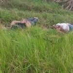 Hallan dos hombres ejecutados en San Juan del Río
