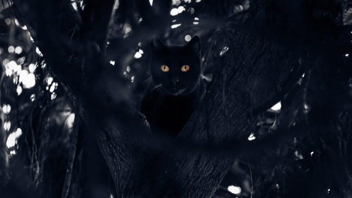 Gato-negro-Hernán-Piñeira