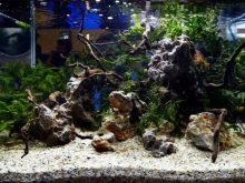 Камни для аквариума: виды, применение и уход kamni dlya akvariuma vidy vybor i primenenie 1 AquaDeco Shop