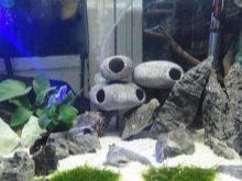Камни для аквариума: виды, применение и уход kamni dlya akvariuma vidy vybor i primenenie 17 AquaDeco Shop