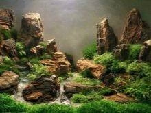 Камни для аквариума: виды, применение и уход kamni dlya akvariuma vidy vybor i primenenie 3 AquaDeco Shop