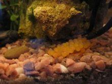Камни для аквариума: виды, применение и уход kamni dlya akvariuma vidy vybor i primenenie 6 AquaDeco Shop