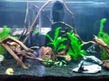 Как выбрать аквариумный грунт: виды, советы и правила grunt dlya akvariuma vidy vybor i primenenie 7 AquaDeco Shop