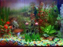 Как выбрать аквариумный грунт: виды, советы и правила grunt dlya akvariuma vidy vybor i primenenie 8 AquaDeco Shop
