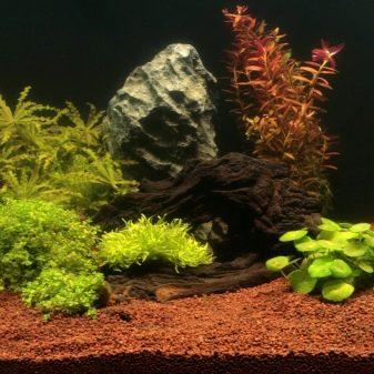 Как выбрать аквариумный грунт: виды, советы и правила grunt dlya akvariuma vidy vybor i primenenie 11 AquaDeco Shop