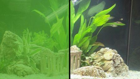 Неліктен аквариумда жасыл су және онымен қалай күресуге болады?