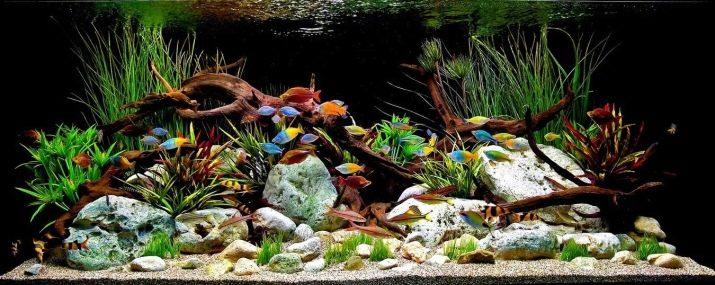Камни для аквариума: виды, применение и уход kamni dlya akvariuma vidy vybor i primenenie 29 AquaDeco Shop