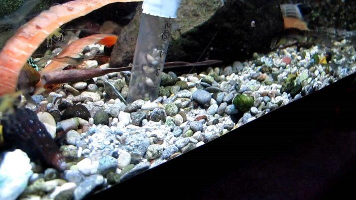 Как выбрать аквариумный грунт: виды, советы и правила grunt dlya akvariuma vidy vybor i primenenie 26 AquaDeco Shop