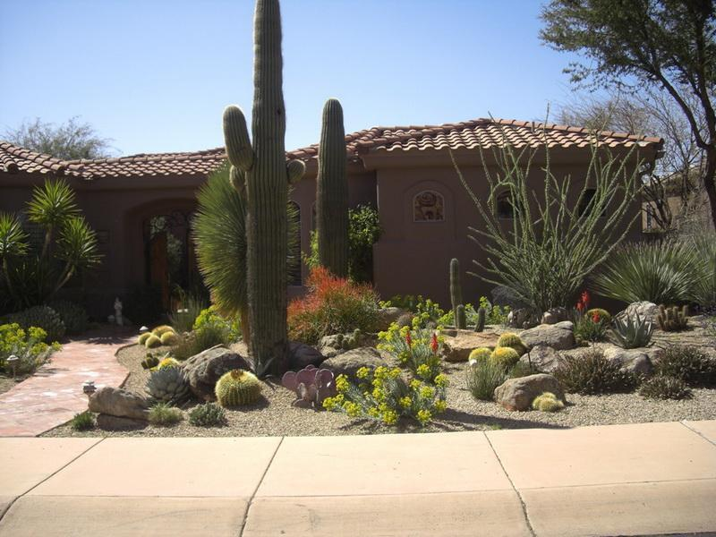Arizona Desert Landscaping Ideas