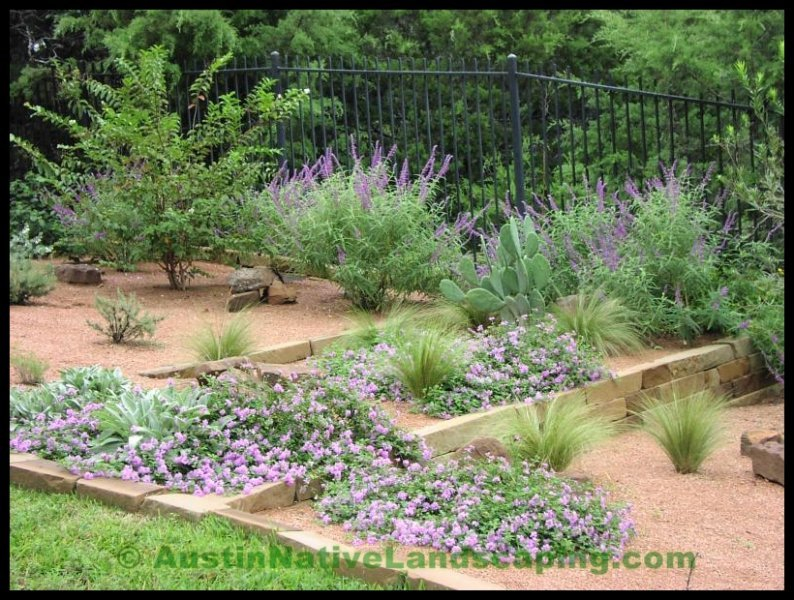 Central Texas Landscaping Ideas