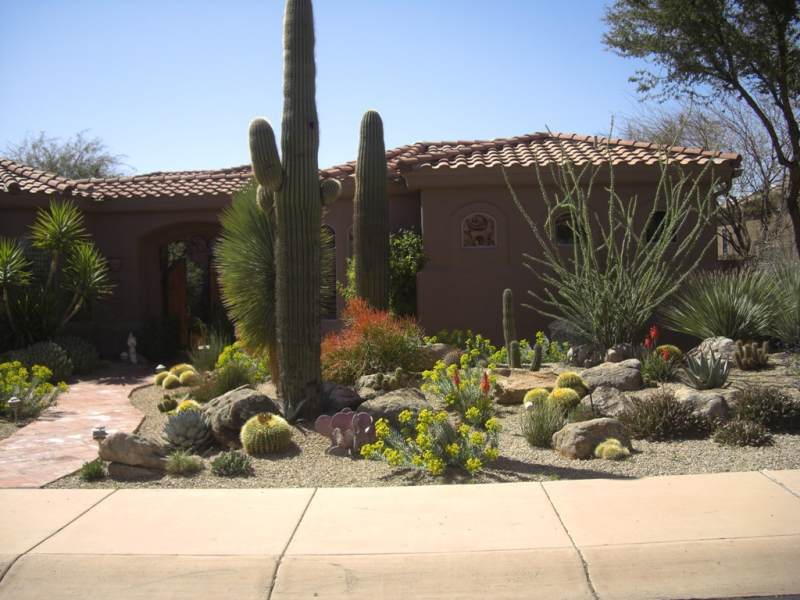 Desert Landscaping Ideas For Small Yards